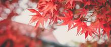 Autumn Colors In Tokyo, Japan,...