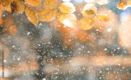 Cadres-photo bureau Orange Autumn park in the first snow