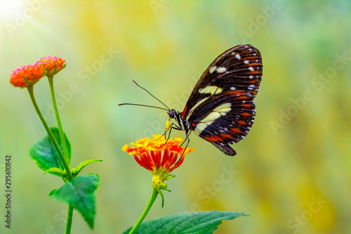 obraz PCV Beautiful butterfly sitting on flower in a summer garden