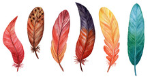 Set Of Bird Feathers Isolated ...