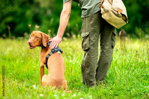 Beautiful Hungarian Vizsla puppy and its owner during obedience training outdoors Fototapet