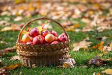 Juicy Apples In A Basket In Th...