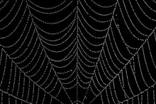 I Walked Into The Spider's Web
