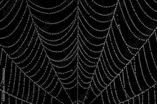 Photo I walked into the spider's web