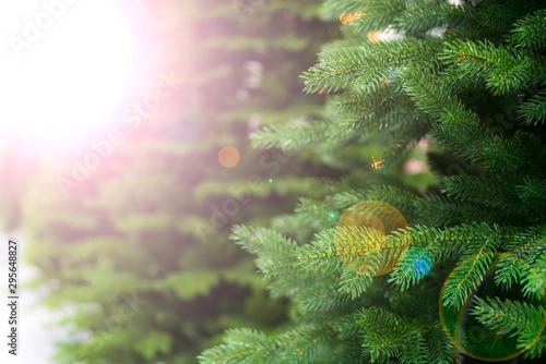Fotomural Green spruce - christmas tree. Defocus. Background for design.
