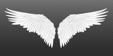 Realistic Wings. Pair Of White...