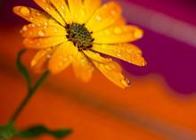 Orange Flowers Isolated Against Vivid Background