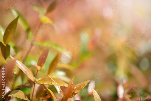 Beautiful sunrise in the park..Shrub refreshment with sunlight and orange blurred background. #295654444