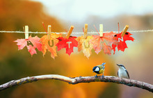 Concept With Two Birds Chickadee And Creeper Flew On A Branch In The Garden Under A Banner With The Word Autumn Carved On Red Maple Leaves On Clothespins And Rope On A Sunny Day