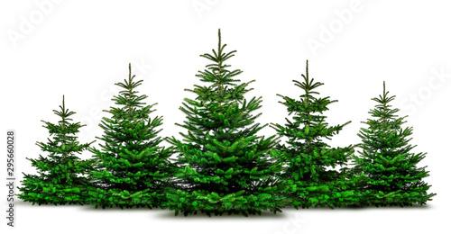 Fotomural Grüne Wehnachtsbäume isoliert auf weißem Hintergrund