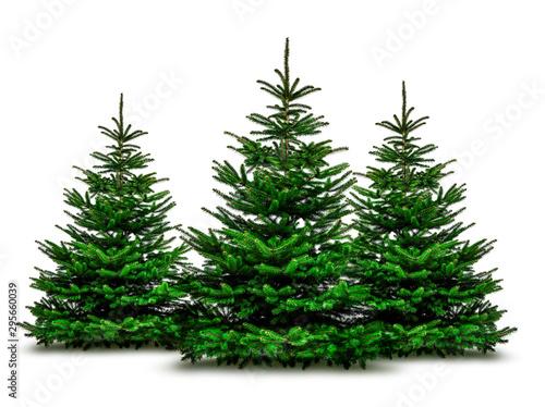 Fototapeta Grüne Wehnachtsbäume isoliert auf weißem Hintergrund obraz