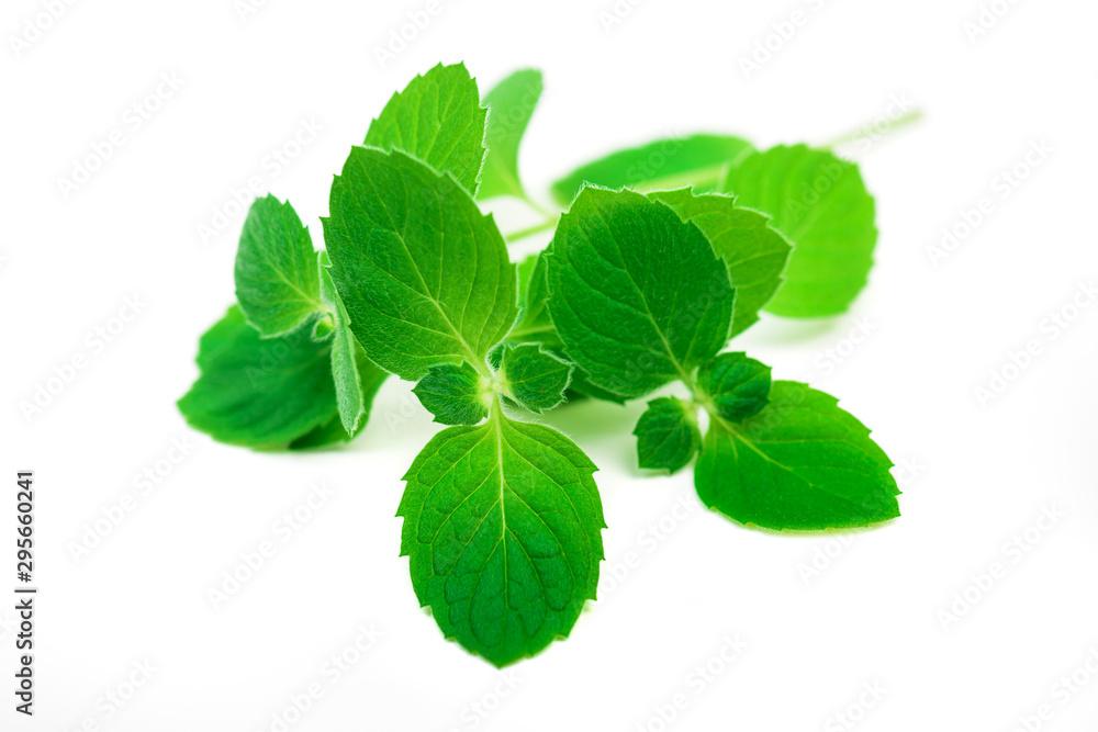 Fototapety, obrazy: Fresh mint leaves herb isolated