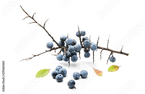 Fresh blackthorn berries with twig, branch and leaves prunus spinosa isolated on Wallpaper Mural