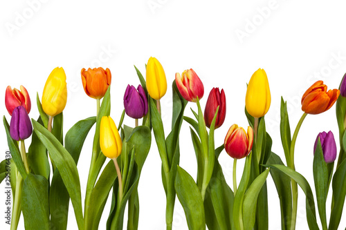 Bunte Tulpen Freisteller #295676430