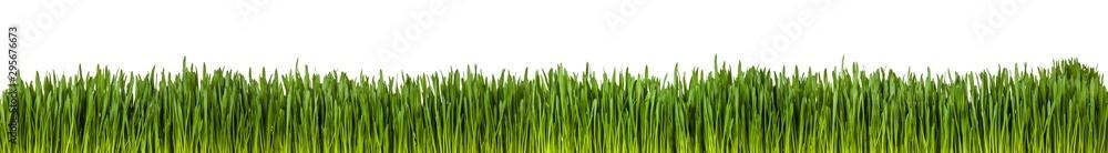 Fototapety, obrazy: Gras im länglichen Format als Freisteller