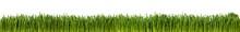 Gras Im Länglichen Format Als...