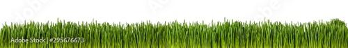 Obraz Gras im länglichen Format als Freisteller - fototapety do salonu