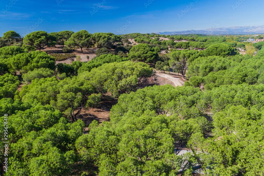 Fototapety, obrazy: Casa de Campo park in Madrid, Spain