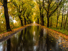 Road In The Autumn Forest In Rain. Asphalt  Road In Overcast Rainy Day. Roadway With Reflection And Trees In Kaliningrad Region. Empty Highway In Fall Woodland.