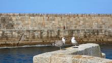 Gaviotas Posadas En El Muro De Un Muelle