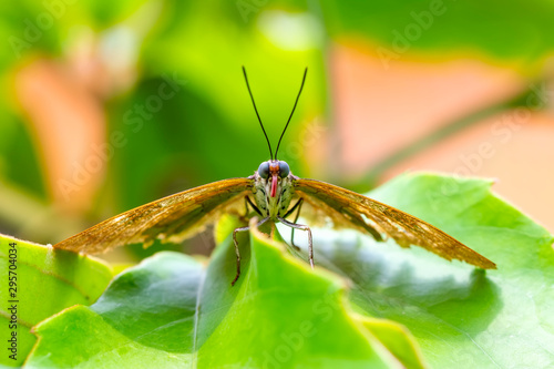 Photo sur Aluminium Papillon Closeup beautiful butterfly & flower in the garden.