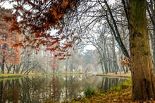 Domeniul Stibei Bucharest Romania Beautiful Autumn Lake Reflection Forest Trees Domain