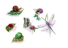 Insects Watercolor Illustration