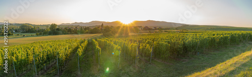 Dangolsheim, France - 09 17 2019: Panoramic view of the vineyards and the village at sunset.