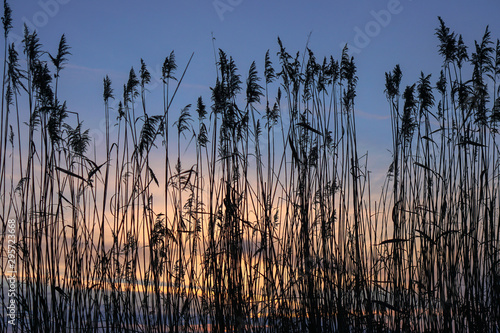 Montage in der Fensternische Cappuccino Bulrush on the lake at sunset. River landscape at sunrise. Graphic background