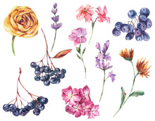 Watercolor Autumn Set Of Wild Flowers, Lavender, Blue Berries, Leaves, Buds.