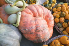 Large Pumpkin And Squash Displ...