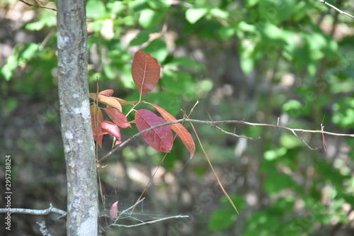 Red leaves on an ancient tree in Noland Trails park