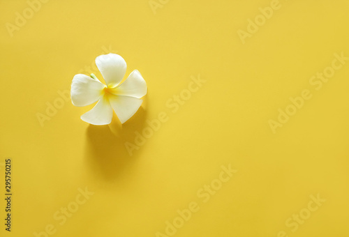 Wall Murals Plumeria White plumeria on bright yellow background with copy spce. Minimal beauty concept.