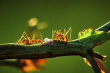 Close-up View Of Ant Climbing ...
