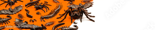 Papel de parede  Black Halloween creepy crawly bugs and spiders on orange background with blank w