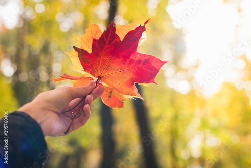 Woman's hand holding colorful red and orange maple leaf in the autumn park Wallpaper Mural