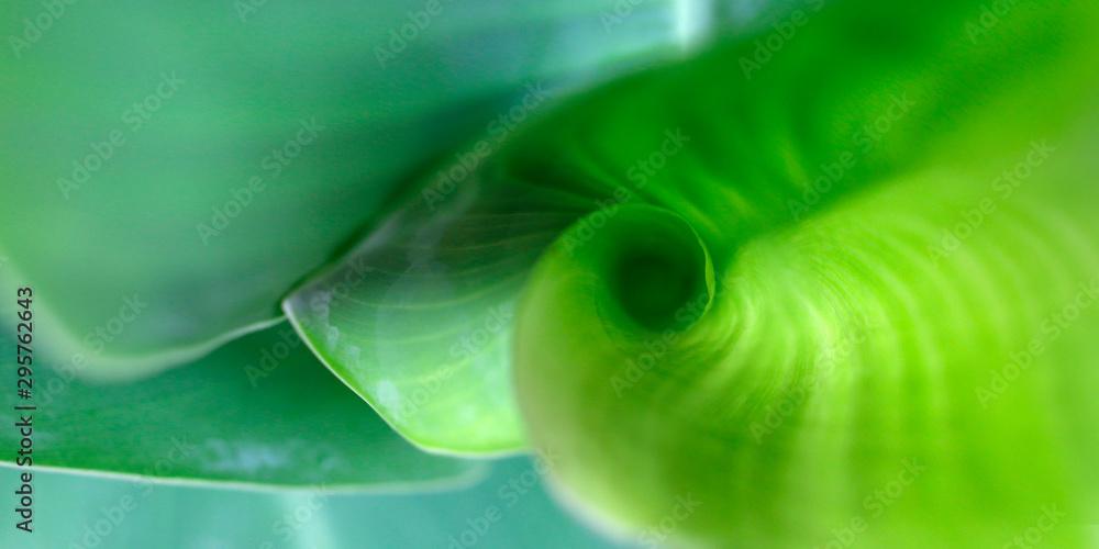 Fototapety, obrazy: close up of banana leaves