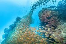 Ishigaki Island Diving - Horde...