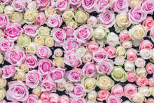 Abstract Background Of Colorful Rose Flower
