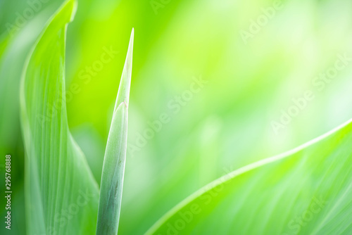 Foto auf Gartenposter Lime grun Closeup nature view of green leaf texture on blurred background with copy space. Natural and freshness concept.