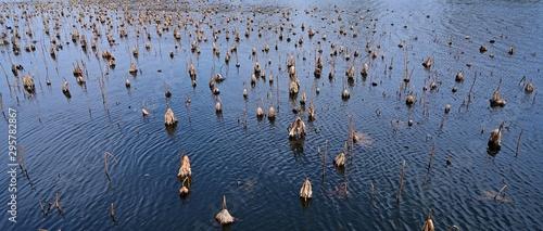 Fotografía  冬枯れのハス池の情景