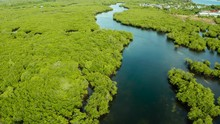 River In Tropical Mangrove Gre...