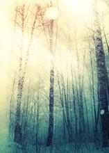 Trees Under Snowfall Design