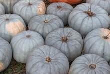 Ripe Pale Green Pumpkins Cucur...