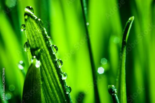 Macro. Background, water drops on the green grass. Desktop background. Selective focus. - 295796446