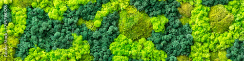 plant foliage as a panoramic background Canvas