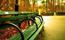 Bench In Park In Autumn