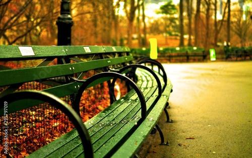 Photo bench in park in autumn