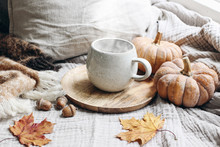 Cozy Autumn Morning Breakfast Still Life Scene. Steaming Cup Of Hot Coffee, Tea Standing On Wooden Plate Near Window. Fall, Thanksgiving Concept. Orange Pumpkins, Acorns And Maple Leaves, Wool Plaid.