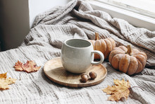 Cozy Autumn Morning Breakfast Still Life Scene. Cup Of Hot Coffee, Tea Standing On Wooden Plate Near Window. Fall, Thanksgiving Concept. Orange Pumpkins, Acorns And Maple Leaves On Cotton Plaid.
